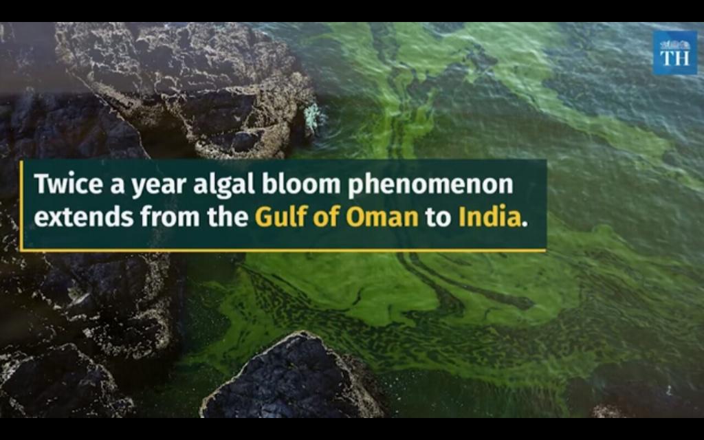 Giant algae bloom in Arabian sea