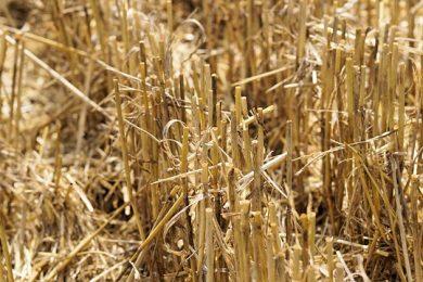 harvest-2804697_640