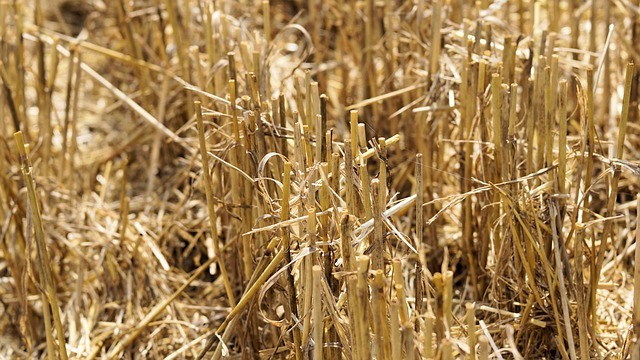 Experts draw attention to sharp fall in agriculture's contribution to GDP
