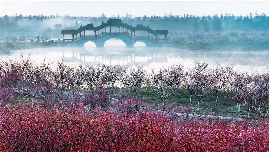 Head to Fengxian for the biggest plum blossom and wintersweet exhibition in Shanghai