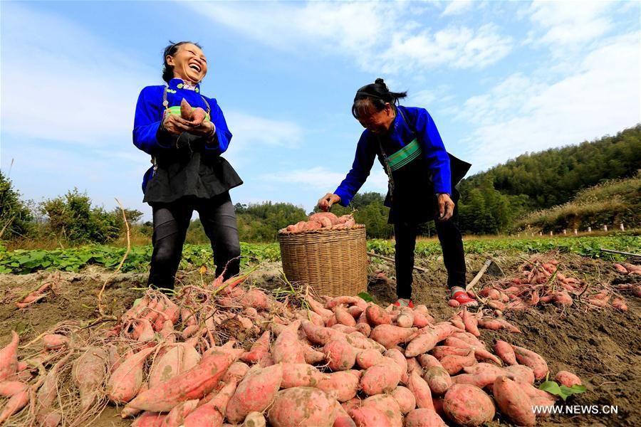 E-commerce helps improve living conditions of households in S China