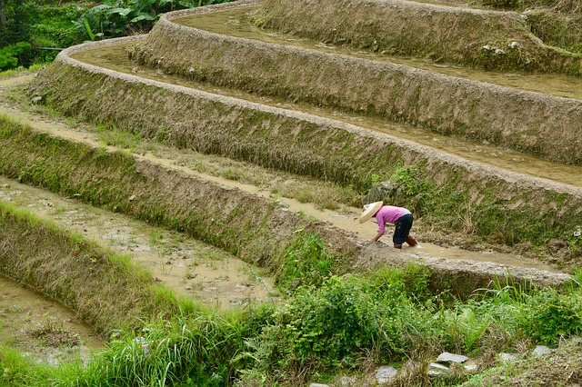 Indian government clears policy to double agriculture exports