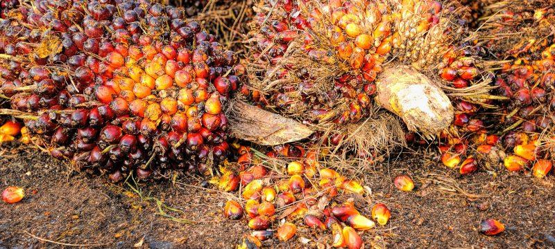 palm-1464655_1920