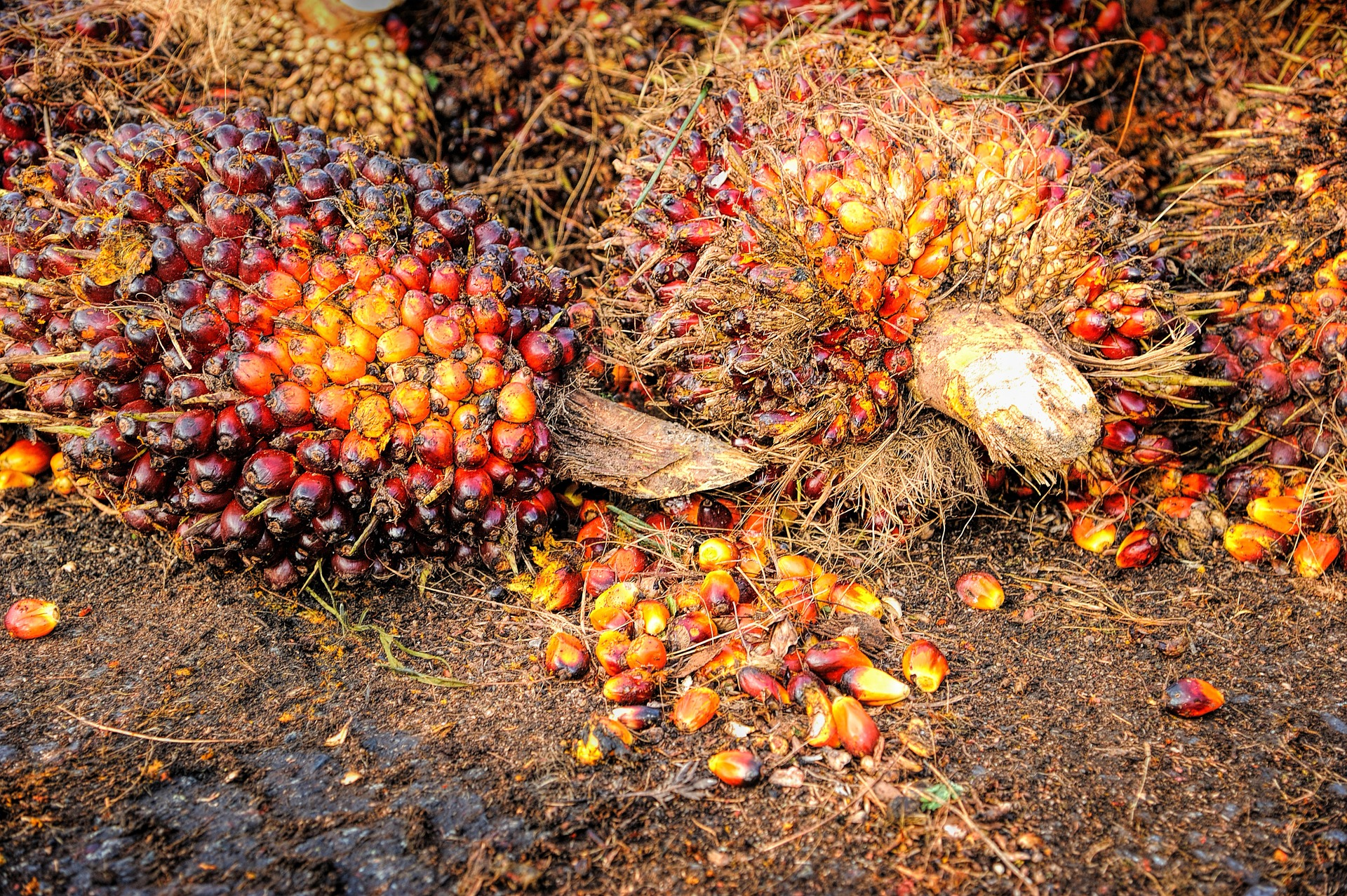 Malaysia's responses to Allegations of Forced Labour in Palm Oil Ban
